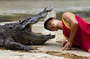Crocodile_.._line_2