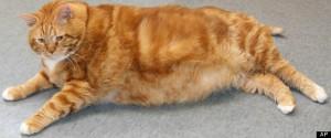 ODD Fat Cat Adoption